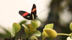 New-Zealand-butterfly