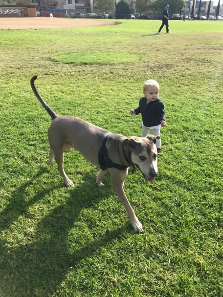 Exploring the dog park.