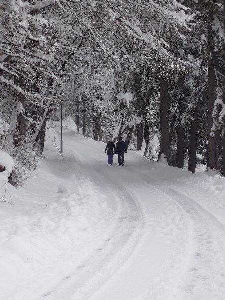 walking around lake bled slovenia
