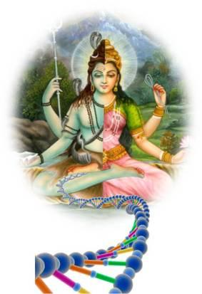 ardhnareeshwara-dna