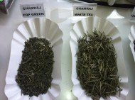 Chamraj Estate Teas