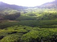 The Munnar Highlands