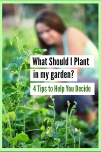What should I plant in my Garden?
