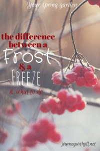 Difference Between a Frost and a Freeze