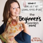 Some Like it Hot: Growing Peppers and Okra {The Beginner's Garden Podcast}