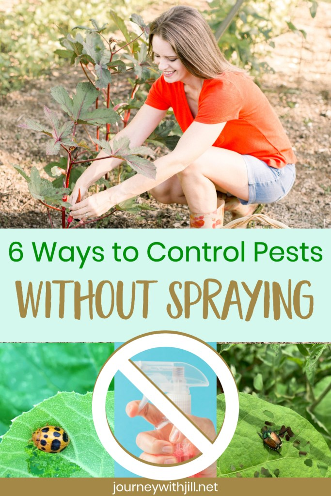 ways to control pests without spraying