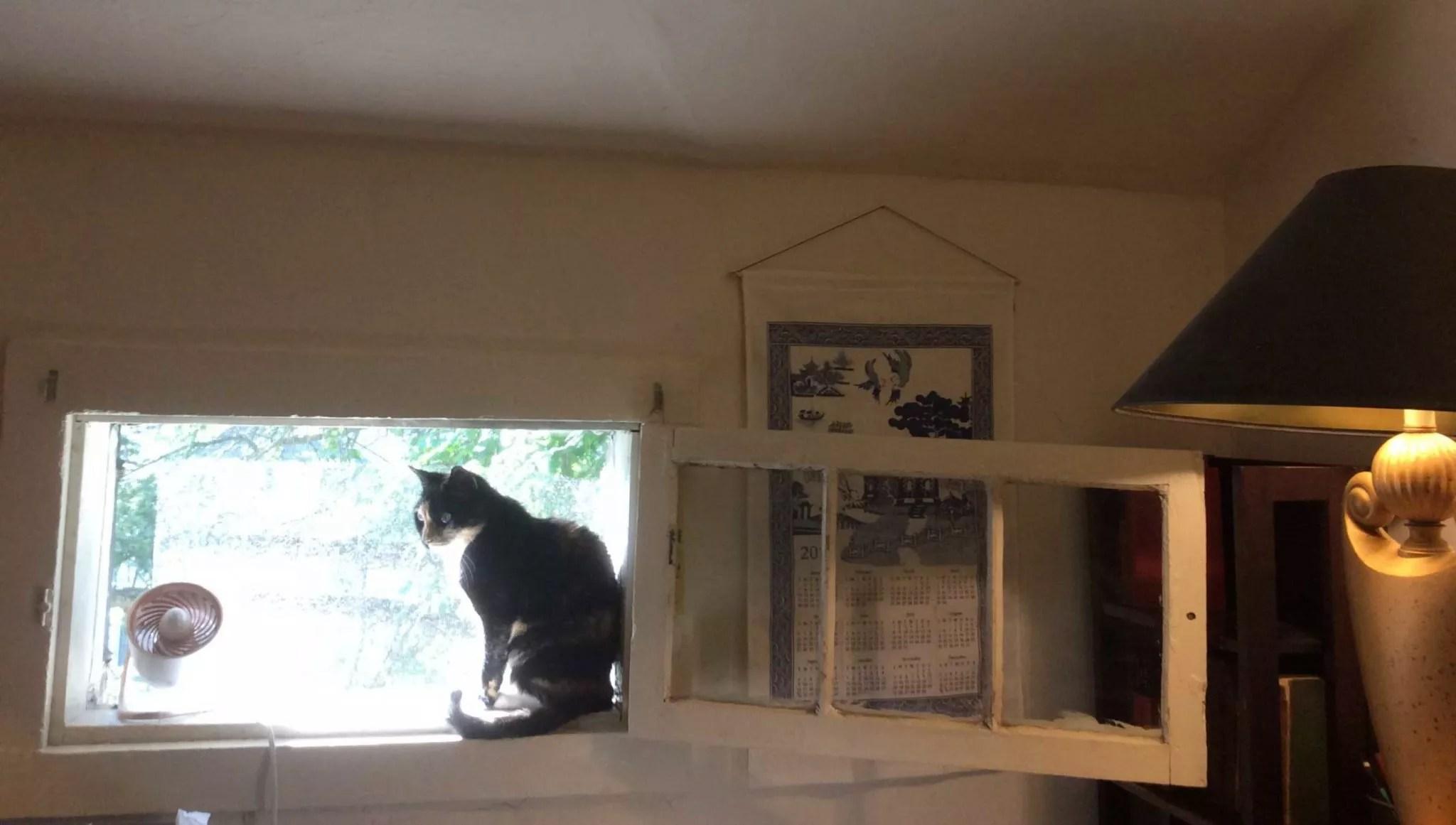 Mimi_window