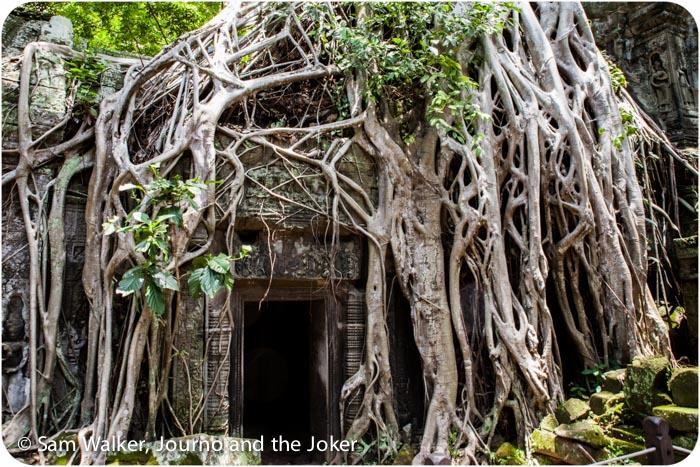 tree toots at Ta Prohm temple, Siem Reap