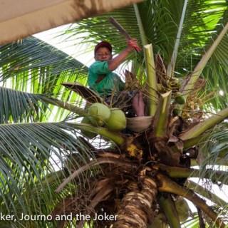 Man picks coconuts