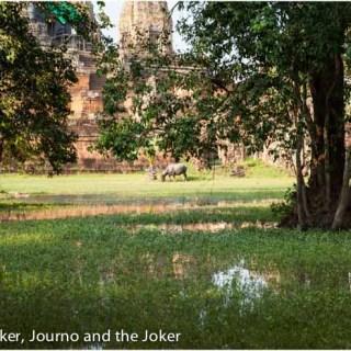 Postcard greeting – Water buffalo
