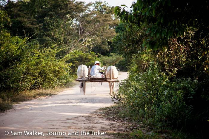 Oxcart in Cambodia