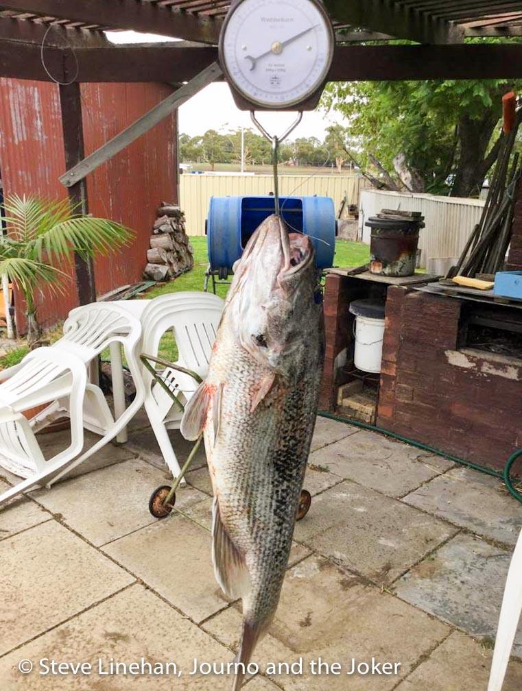 Fishing catch Western Australia