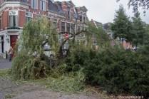 groningen-oranje- en plantsoenwijk-grachtstraat-omgewaaide boom-3