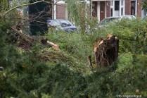 groningen-oranje- en plantsoenwijk-grachtstraat-omgewaaide boom-4