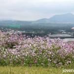 View from Seongsan Ilchubong