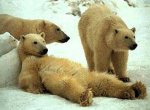 http://4.bp.blogspot.com/_QEnp8M8cVmo/R8xsdjhD3kI/AAAAAAAAAU4/2DH7wViz0CM/s400/lazy+bear.jpg