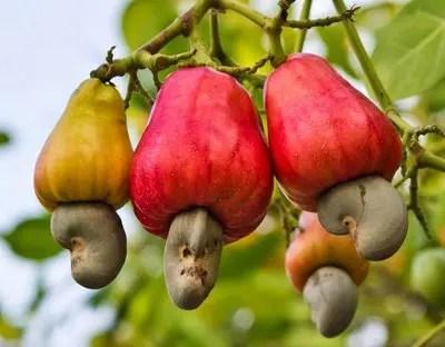 frutos para degustar em Roraima