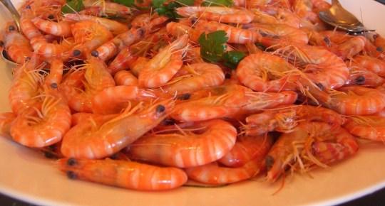 shrimpcover