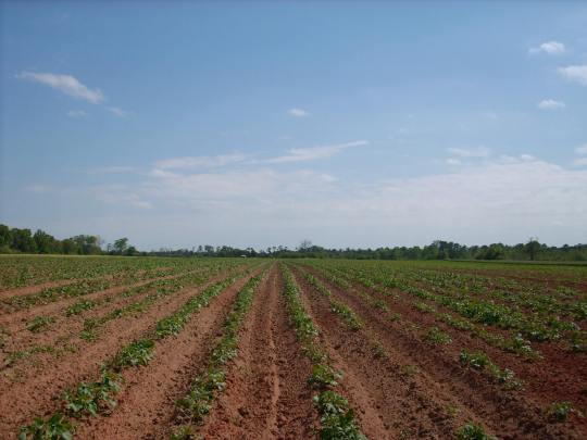 Jeta Farms