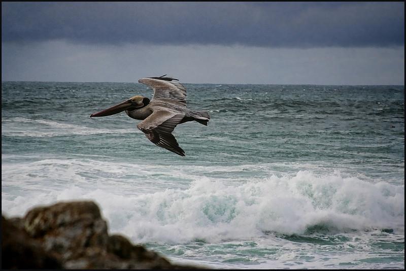 Pelican zero
