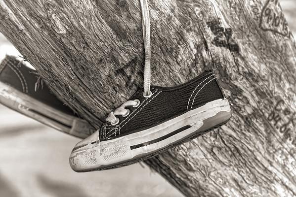 shoe tree shoe