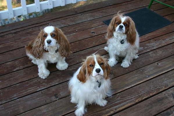 three on porch