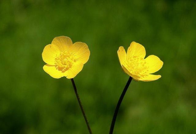 Цветочный гороскоп по дате рождения: узнайте, какой вы цветок 3
