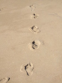 Steps in Beach – Rodrigo Gutierrez (FreeImages.com)