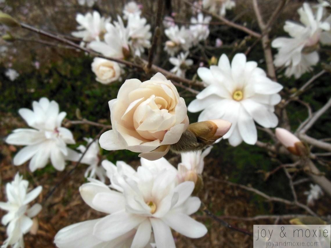 magnolia1jam03.13.16