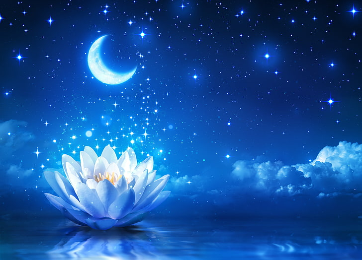 moon-sky-night-lotus-flowers-wallpaper-preview