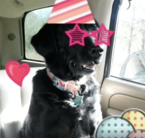 Goofy Gumbo with Birthday hat