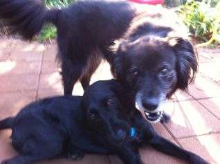 Juli Jordan and puppies 8