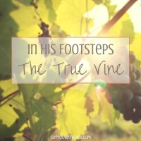 In His Footsteps -- the true vine