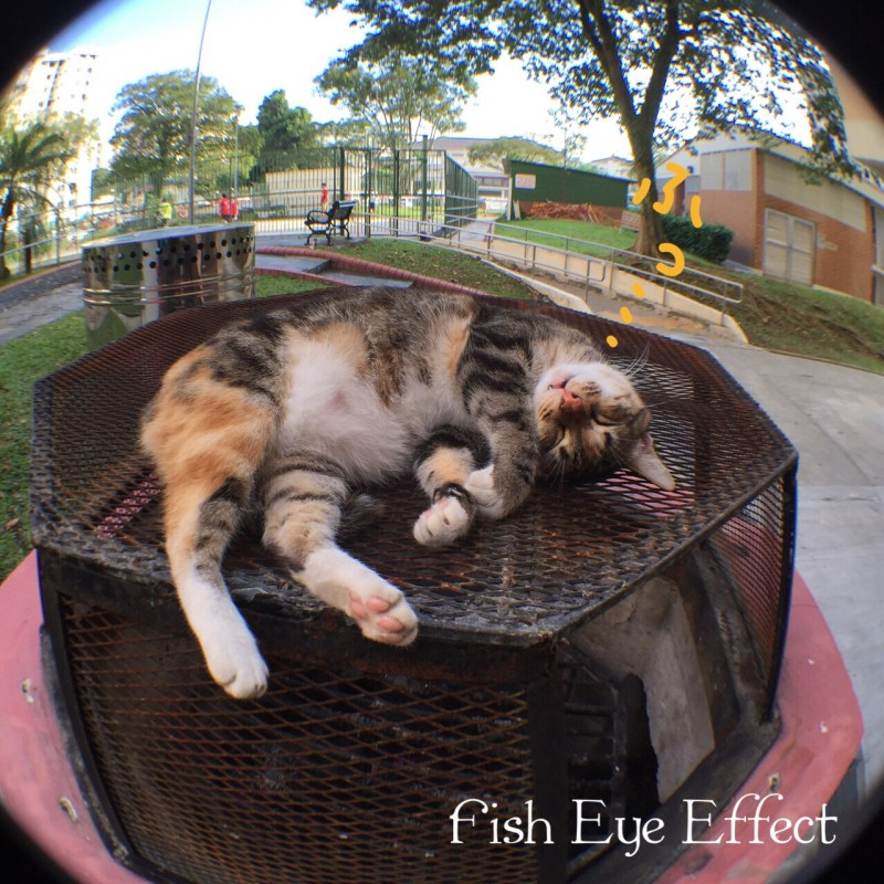 ztylus fish eye cat