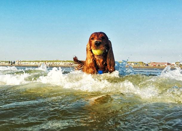 kuzco swimming
