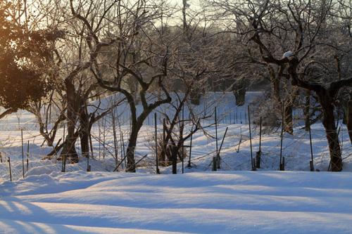 freezing-trees2