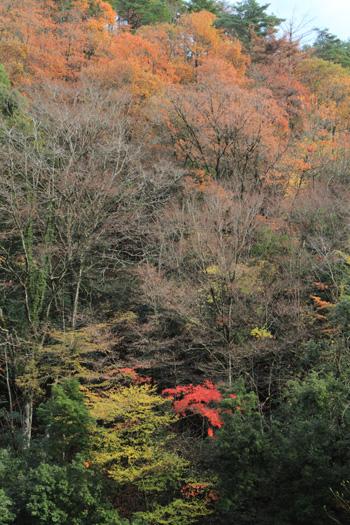 okuyama1