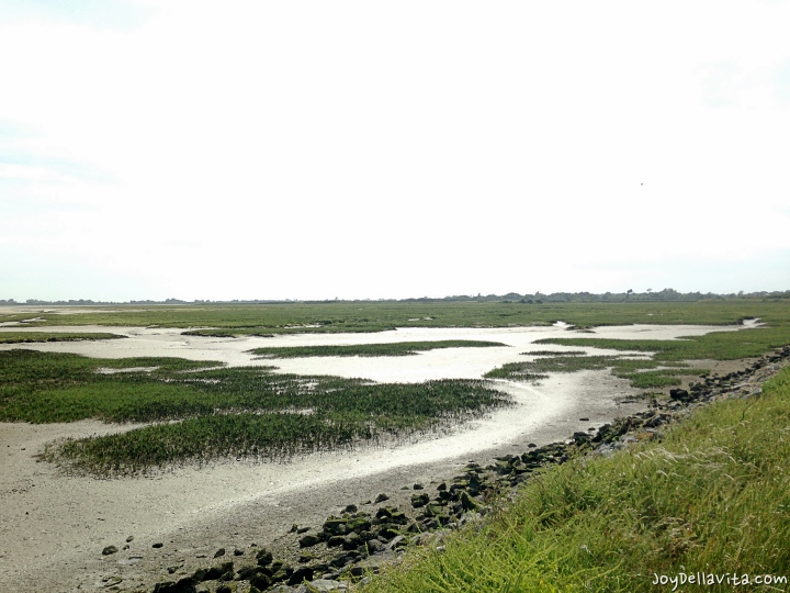 Pagham nature reserve