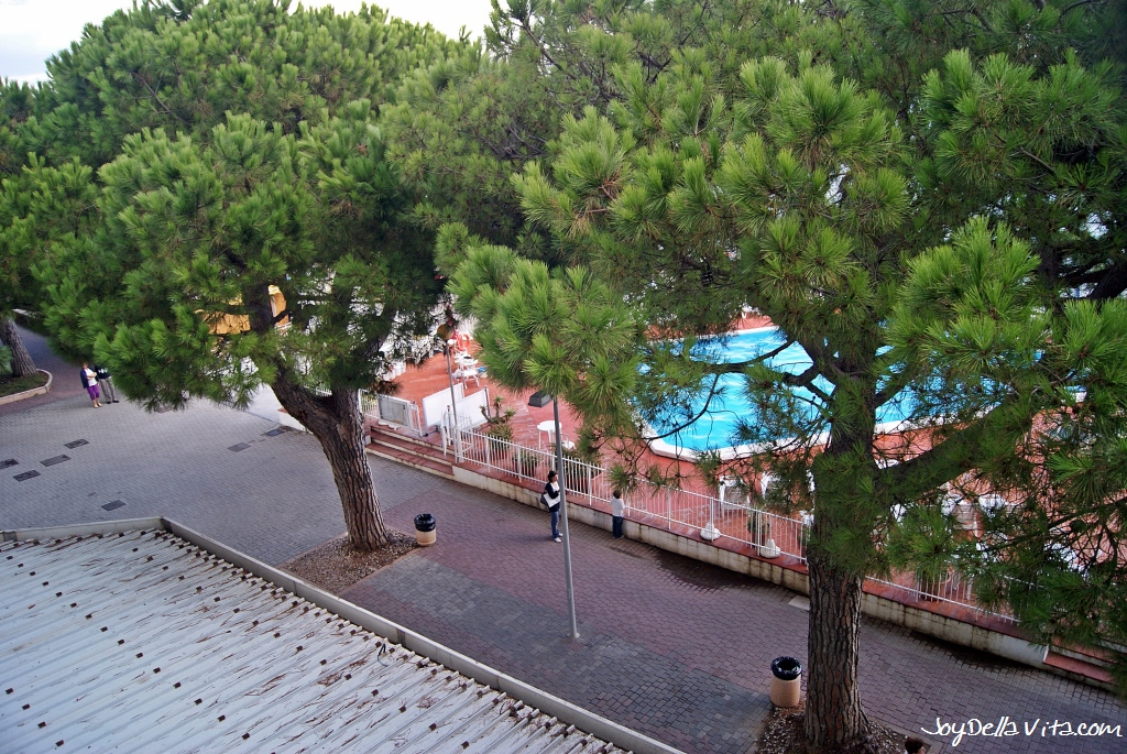 Hotel Room view on Pine Trees from Hotel Mayola