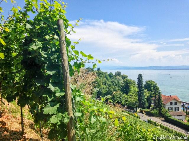 there grows the delicious Meersburg Wine