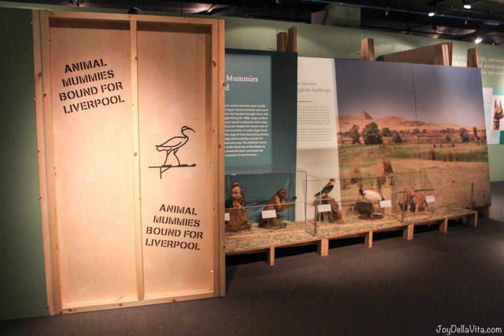 Animal Mummies World Museum Liverpool