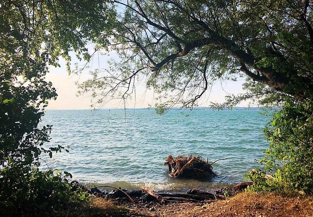 Sightseeing Walk Bregenz shores of Lake Constance