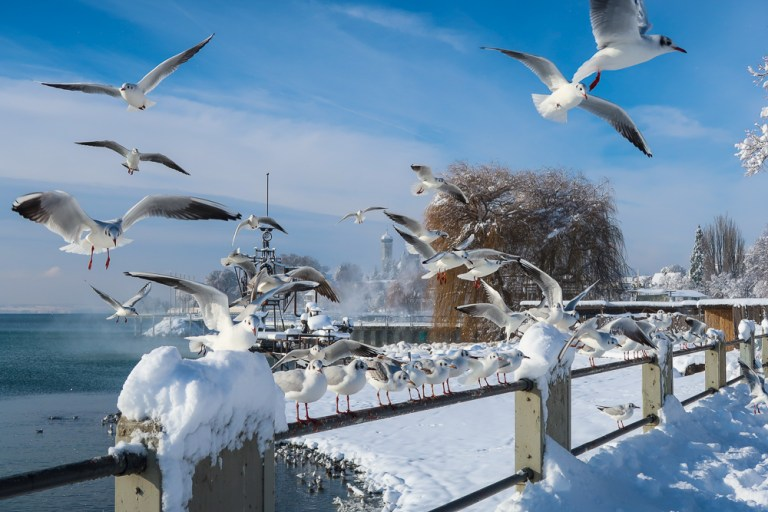 Sightseeing Walk: snowy Friedrichshafen at Lake Constance after the 24 h snowfall in January 2021