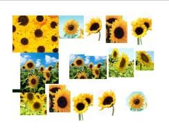 Sunflowers Sheet