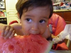 dragonfly watermelon