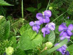 flowers on Raon Mt.1