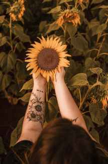 Top down perspective of person with sunflower tattoo holding a sunflower. This one has a healthy spirit, while the others have begin to droop and wilt. Joyful Empath offers individual therapy in Richmond, CA, spiritual therapy in San Francisco, CA, and other services. Contact us today to get in touch with a TGNC therapist today.