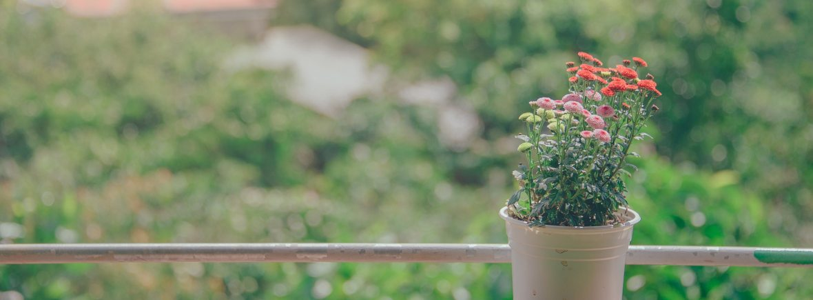 A vibrant potted plant rests on a wooden railing. Joyful Empath offers individual therapy in San Francisco, CA. Contact us today for spiritual therapy, individual therapy, hsp therapy, and more.