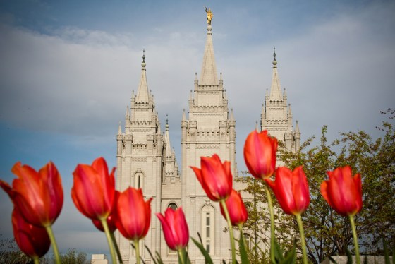 Temple Square flowers