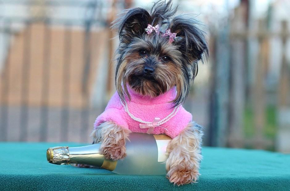 http://joyfulsource.com/measure-dog-clothes/